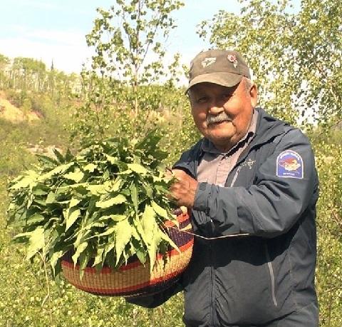 Foraging for Wild Rhubarb Alongside Tr'ondëk Hwëch'in Elder