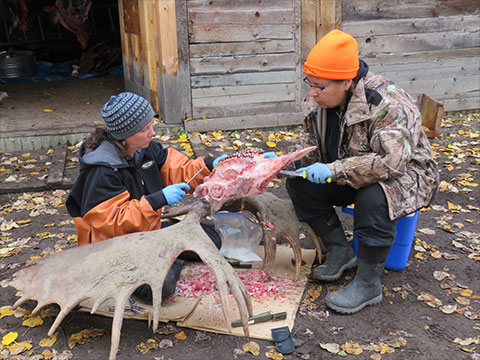 Tr'ondëk Hwëch'in Fall Harvest Culture Camp Celebrates a Timeless Tradition