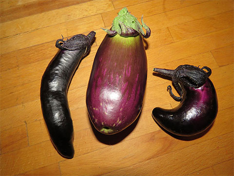 Eggplants in the North