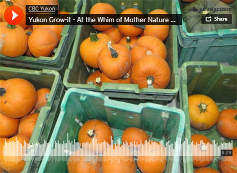 Yu-Kon Grow It: Suzanne's 60-Day Update