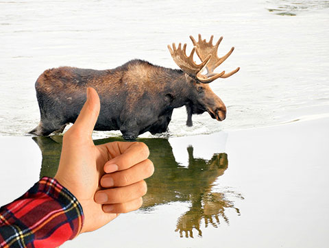 Gerard's Blog: Cat-and-Moose Game Ends