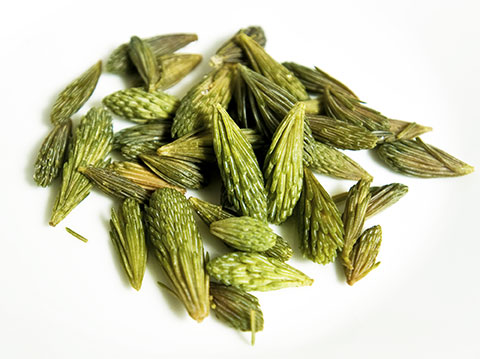 The Many Uses of Spruce Tips